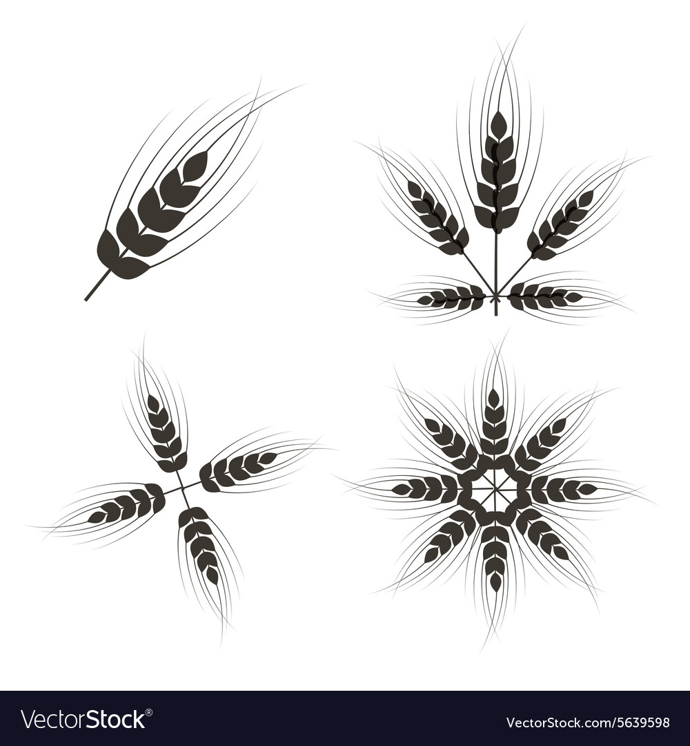 Ears of Wheat Set Isolated on White Background vector image