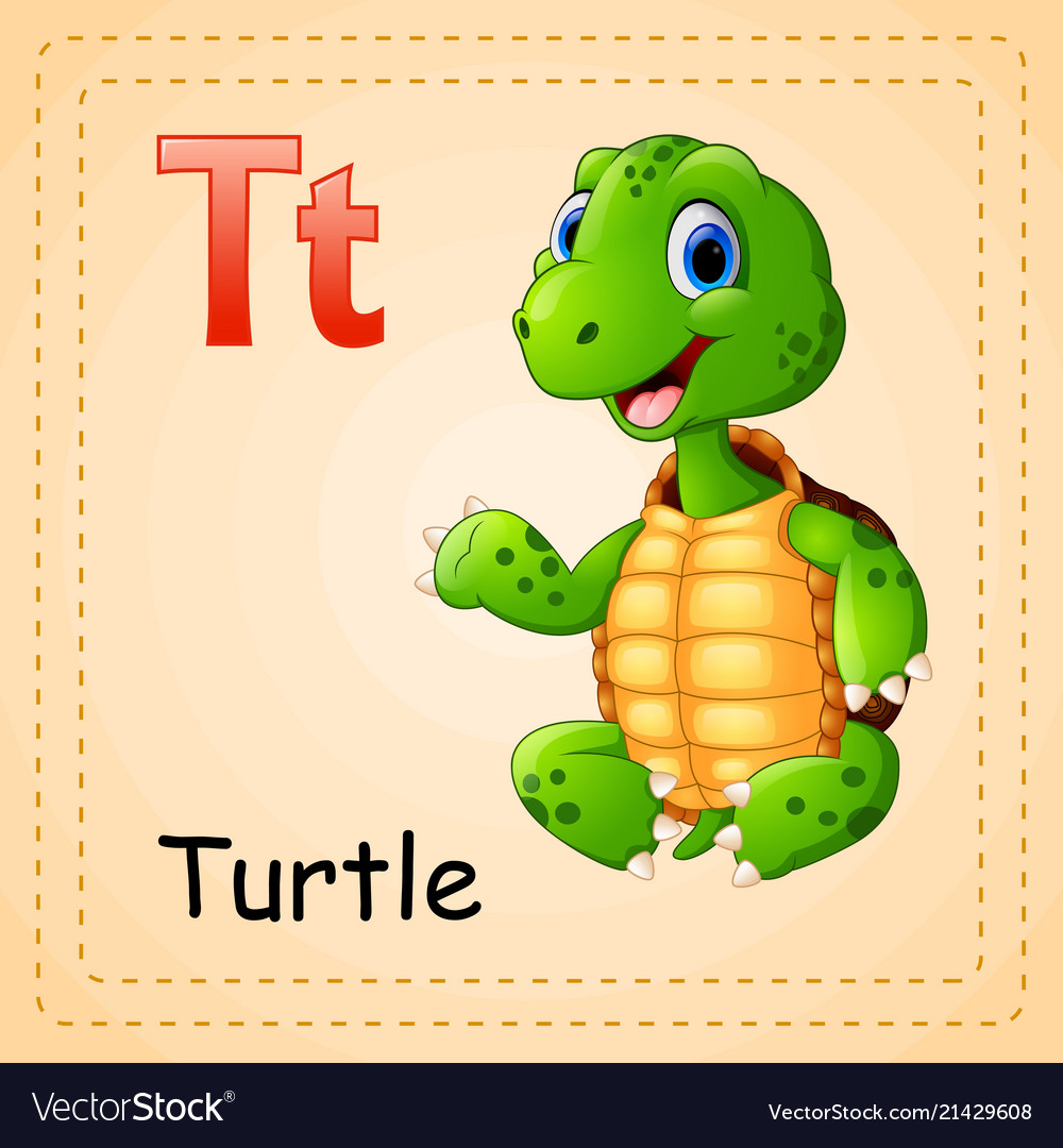 Animals alphabet t is for turtle