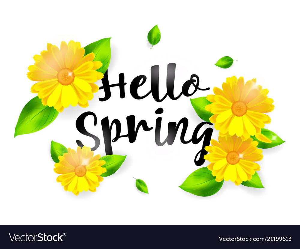 Hello spring background with flower