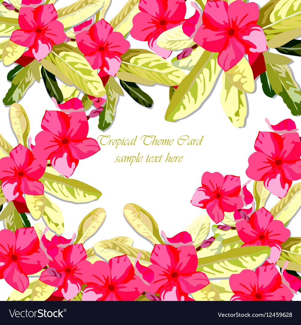 Pink Fuchsia Summer Flowers Background Royalty Free Vector