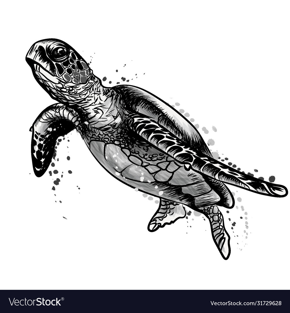 Sea turtle black and white drawing