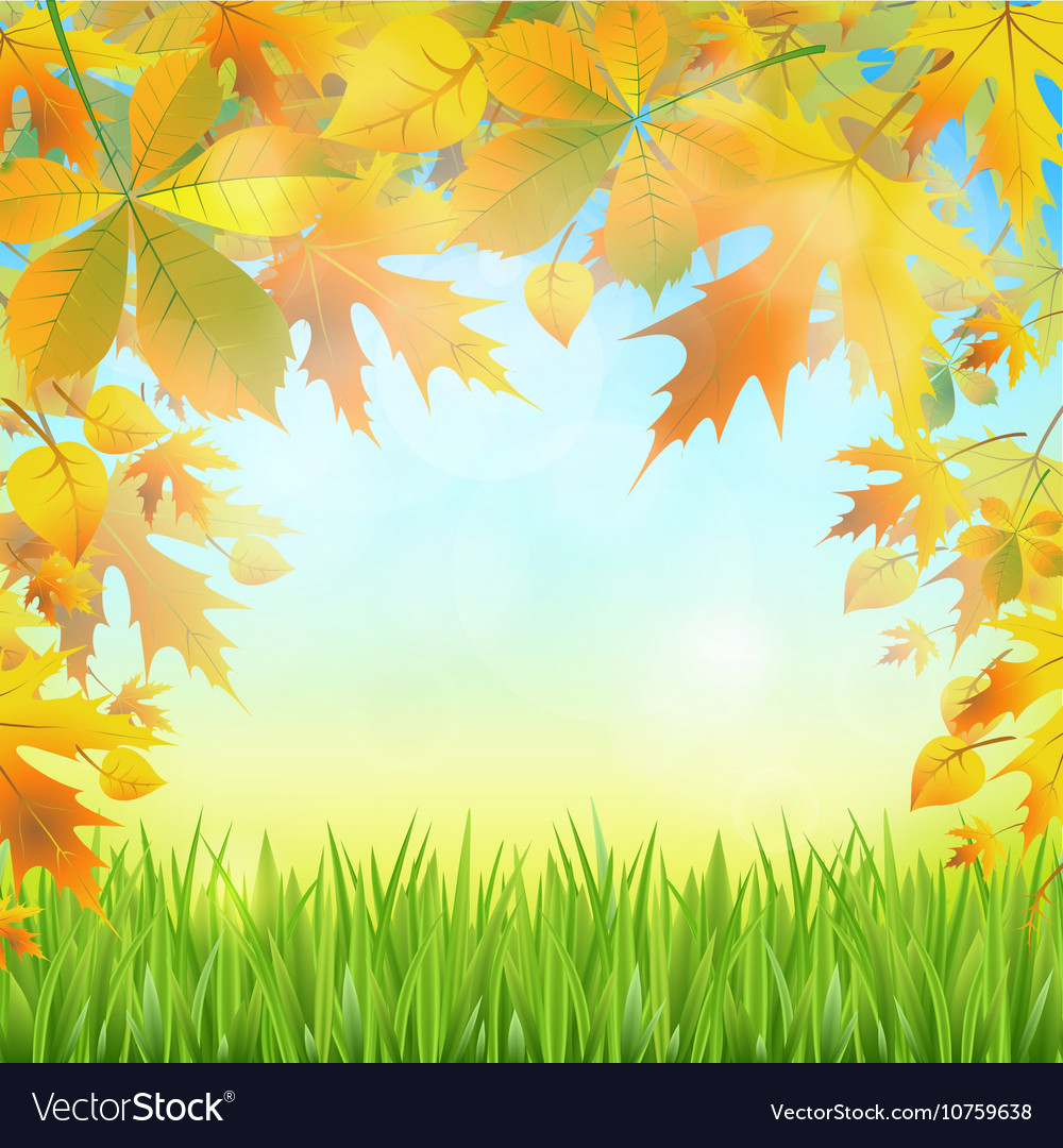 Autumn leaves on the abstract background of the