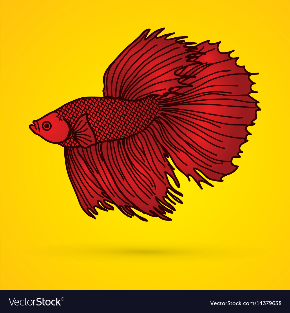 Siamese, Fighting & Fish Vector Images (42)