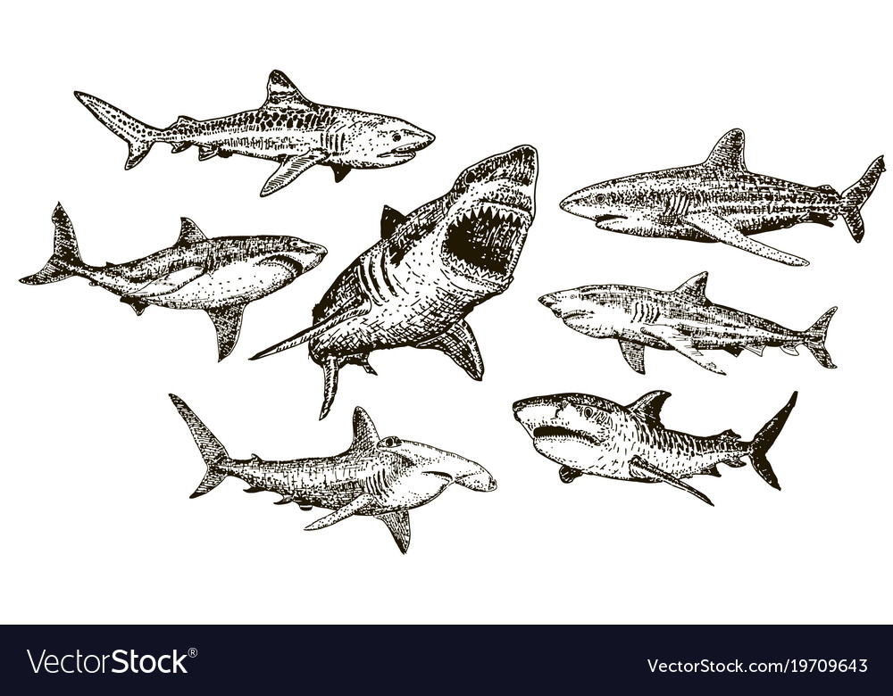 Ink hand drawn shark icon set