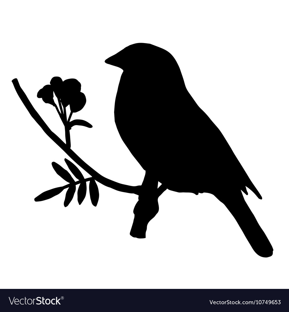 High quality Silhouette bird on ash branch vector image