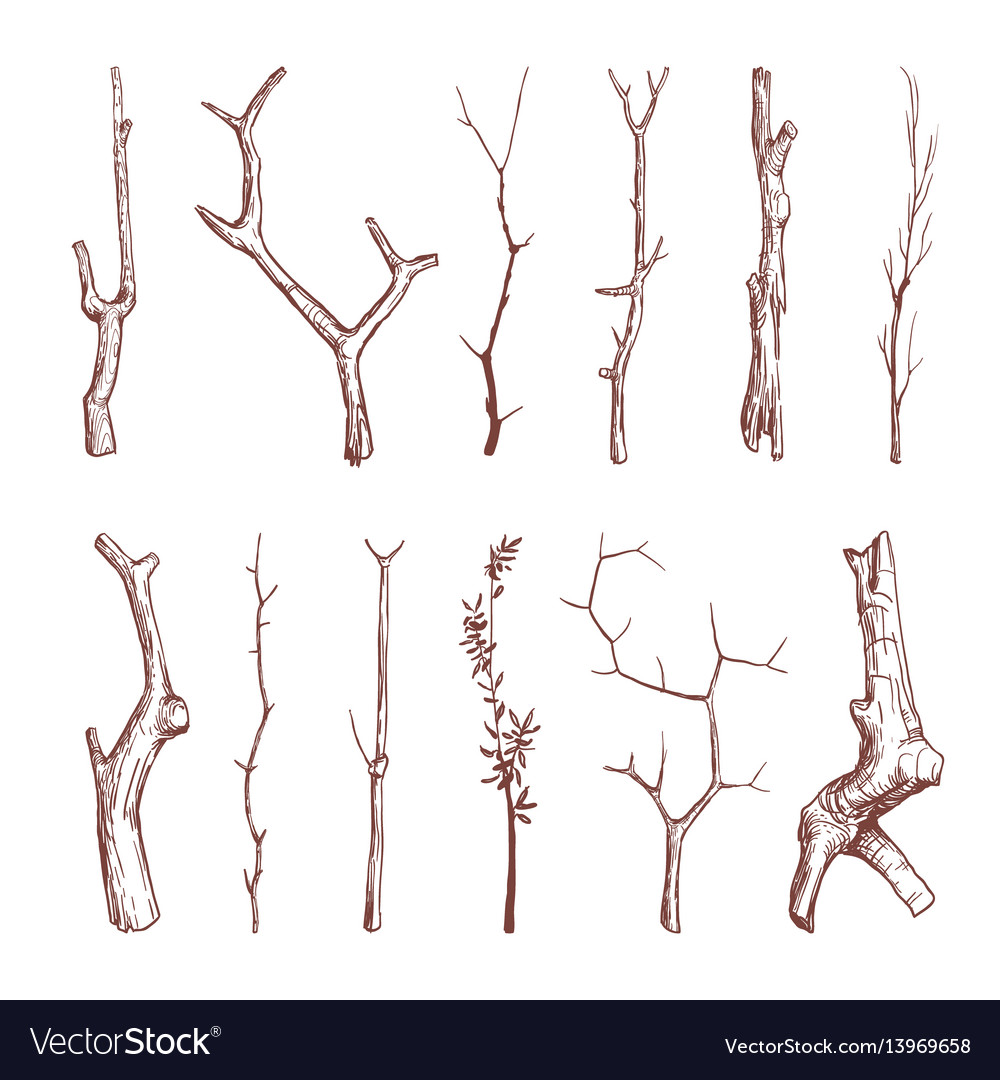 Hand drawn wood twigs wooden sticks tree