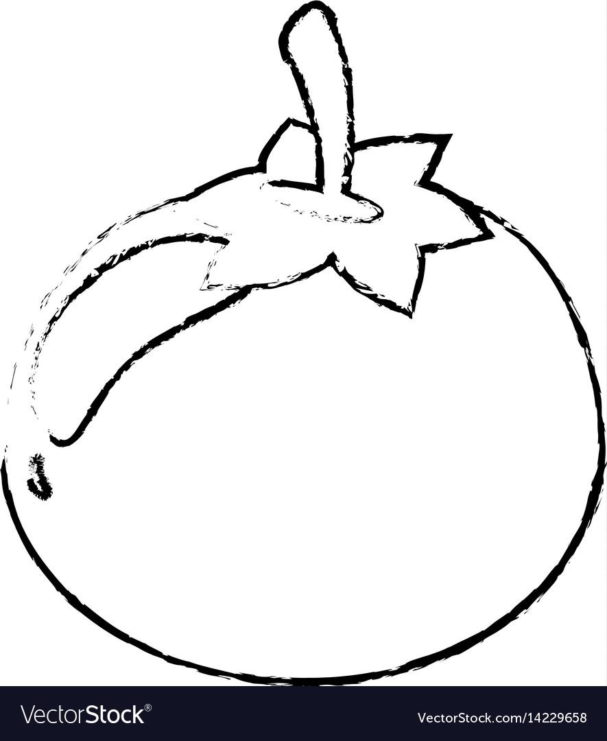 Tomato food diet healthy sketch vector image
