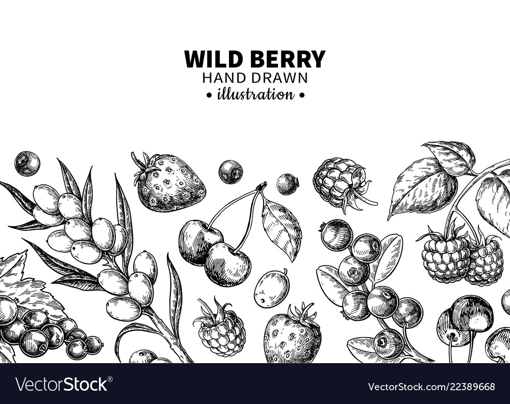 Wild berry drawing hand drawn vintage