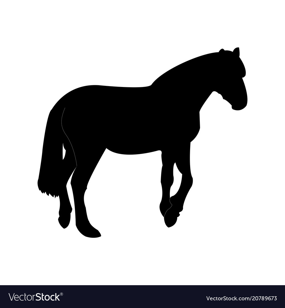 Silhouette of the horse template