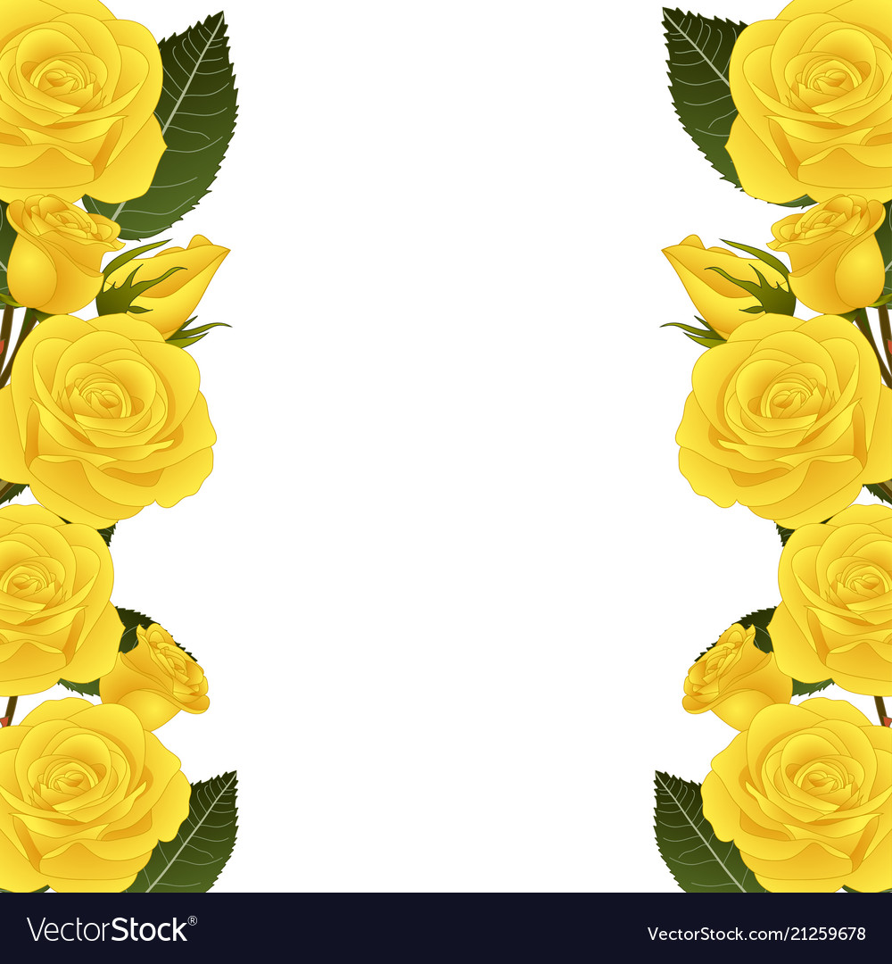 Yellow Rose Flower Border Royalty Free Vector Image