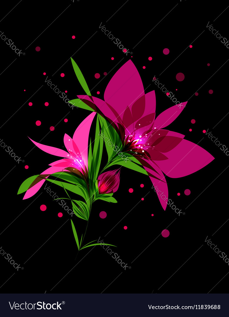 Magic pink flower blooming on black background vector image mightylinksfo