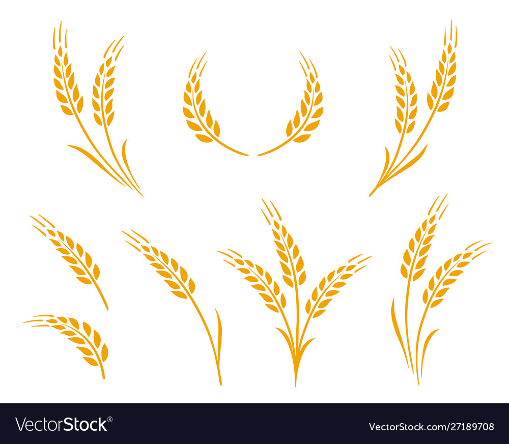 Golden natural wheat ears icons logo set