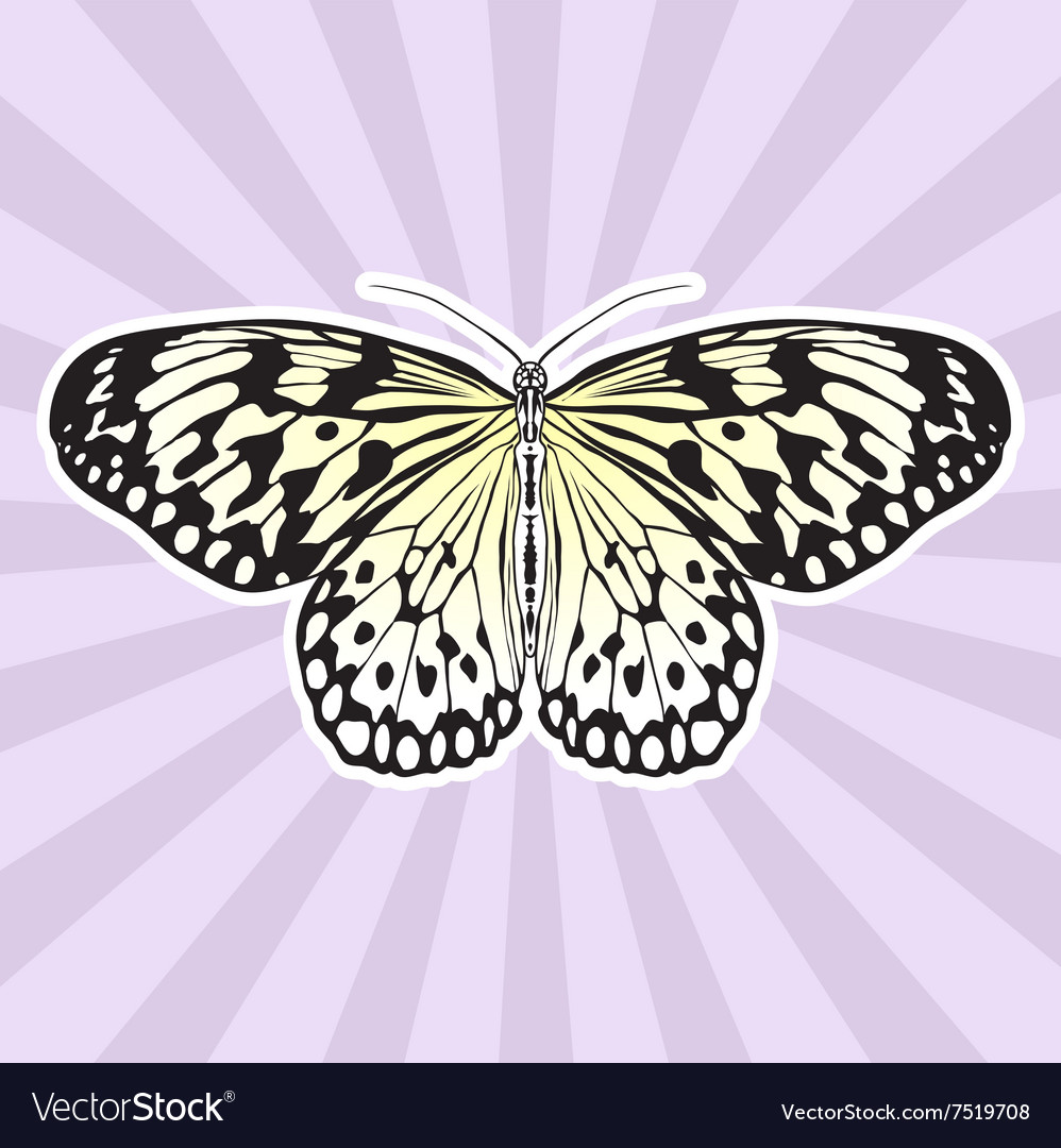 Insect anatomy Sticker Butterfly Idea Leuconoe Vector Image