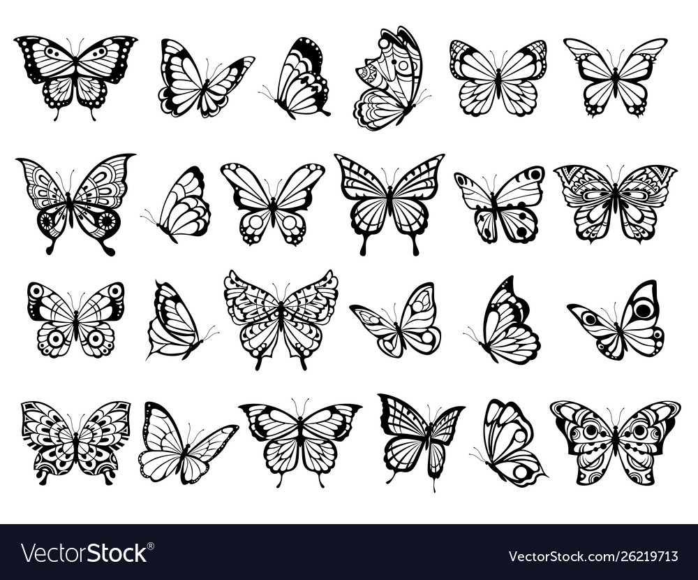 Butterfly collection beautiful nature flying
