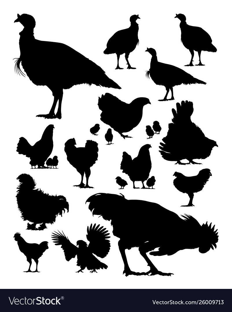Turkey and chicken silhouette
