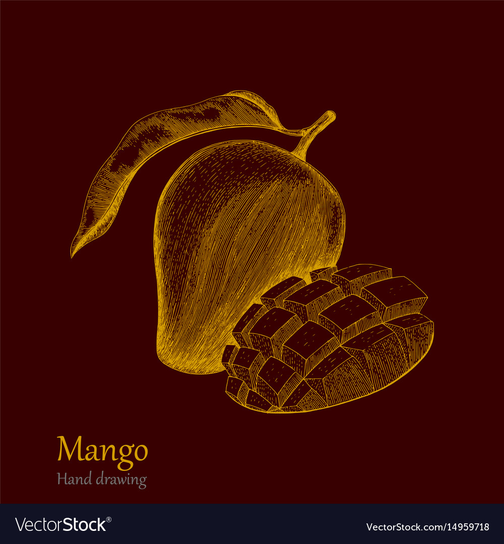 Mango hand drawing engraving style vector image