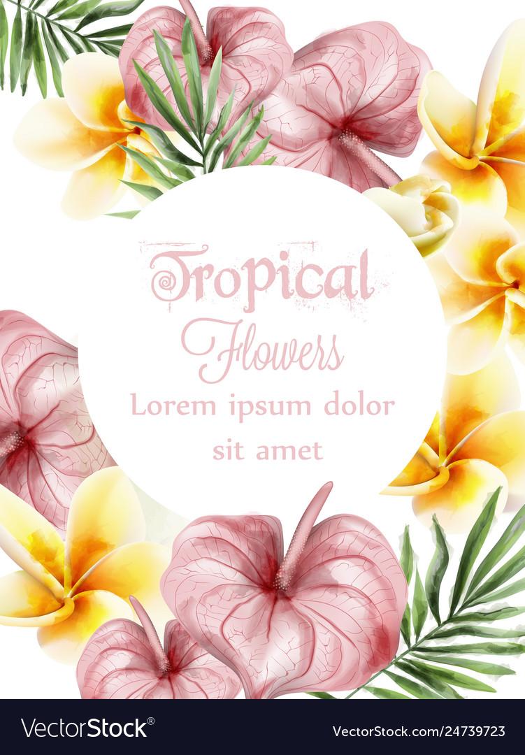 Anthurium and plumeria tropic flowers