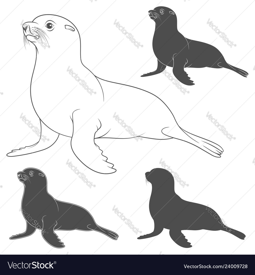 Set of black and white with fur seal
