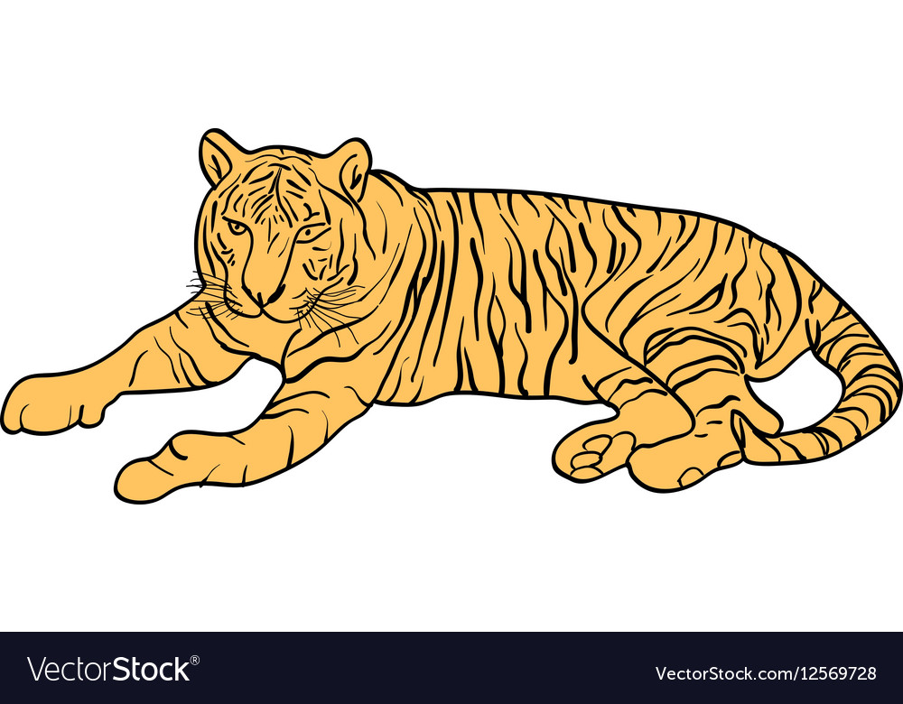 Sketch beautiful tiger on a white background vector image