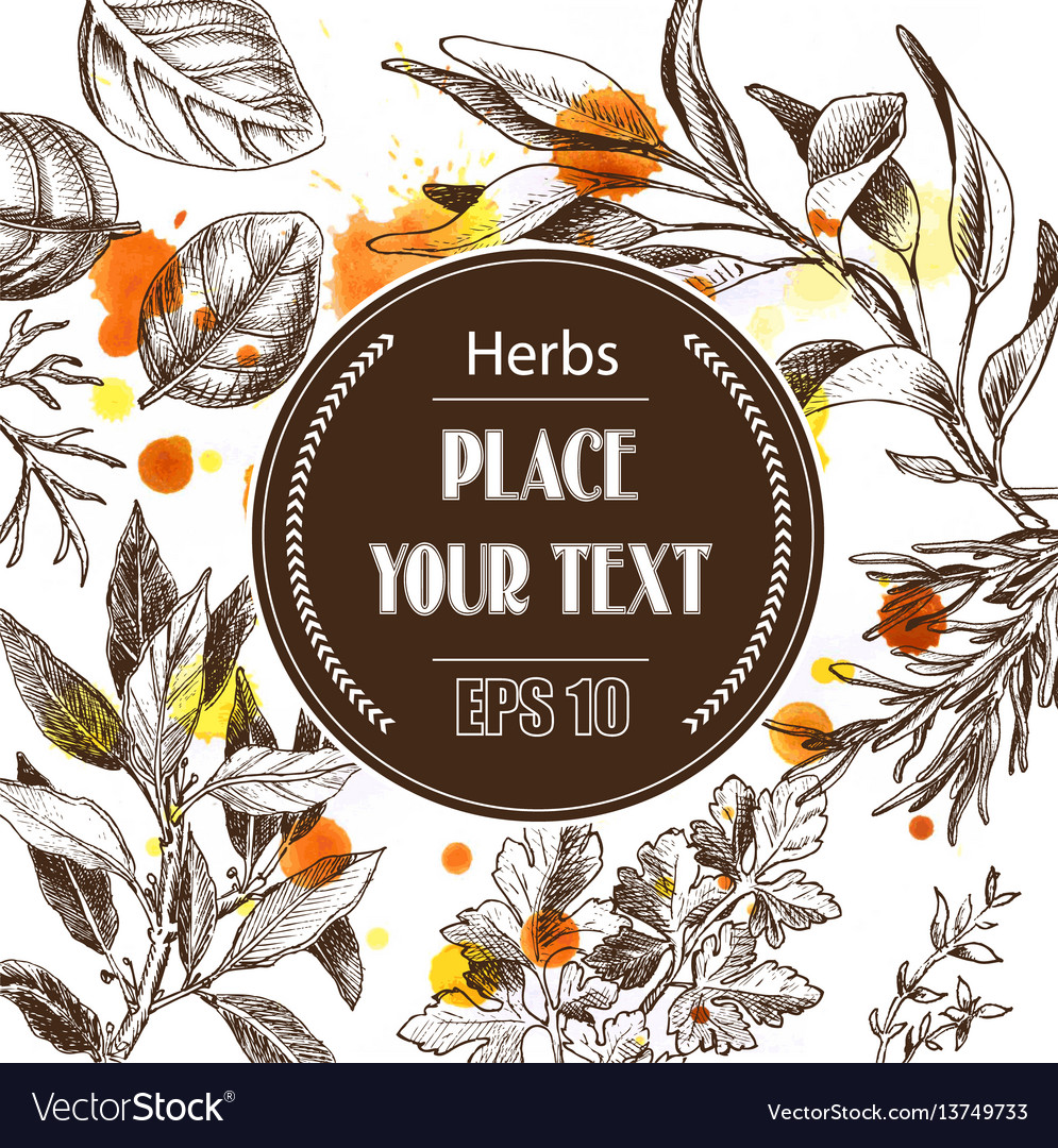 Background sketch herbs herbs - bay leaf vector image