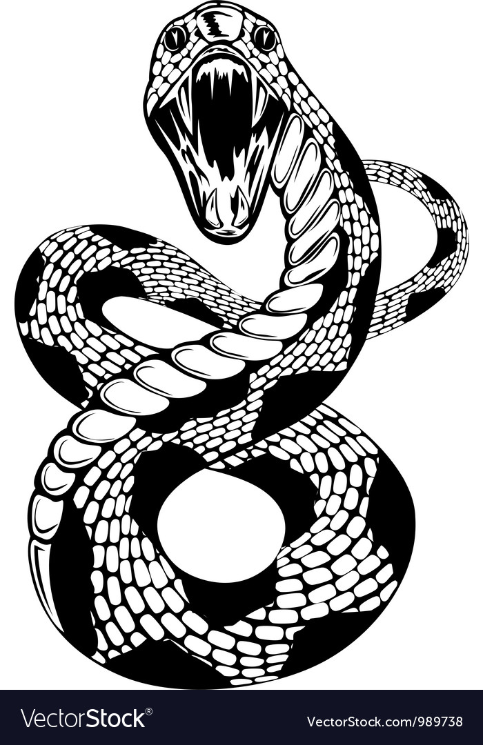 Snake attacke vector image