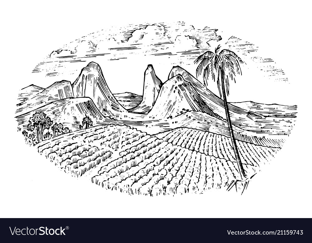 Coffee field cocoa plantation vintage landscape