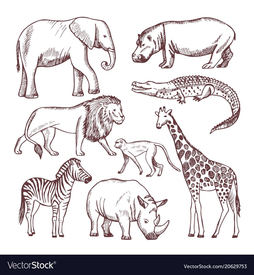 Different animals of savana and africa