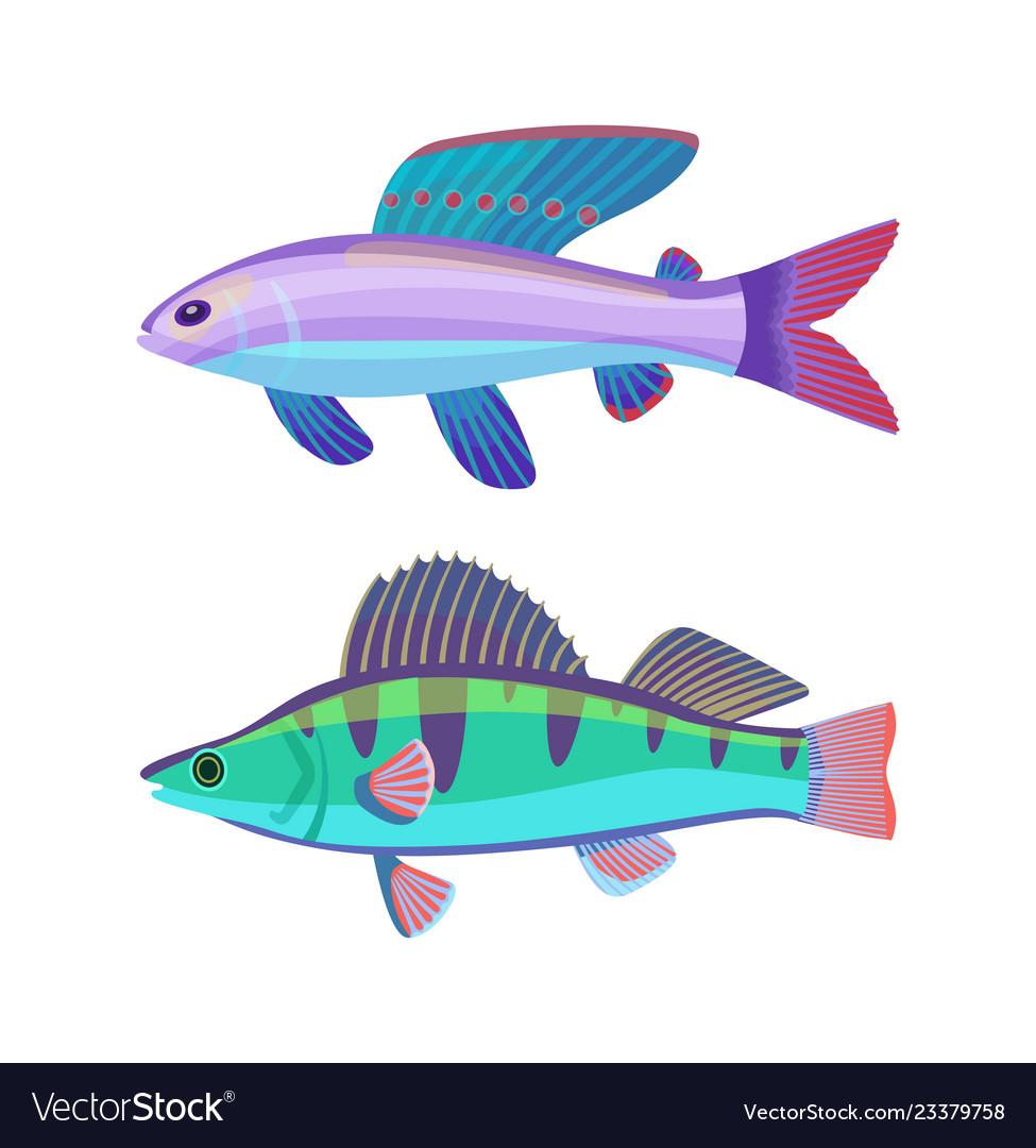 Rare aquarium wrasse specie colorful