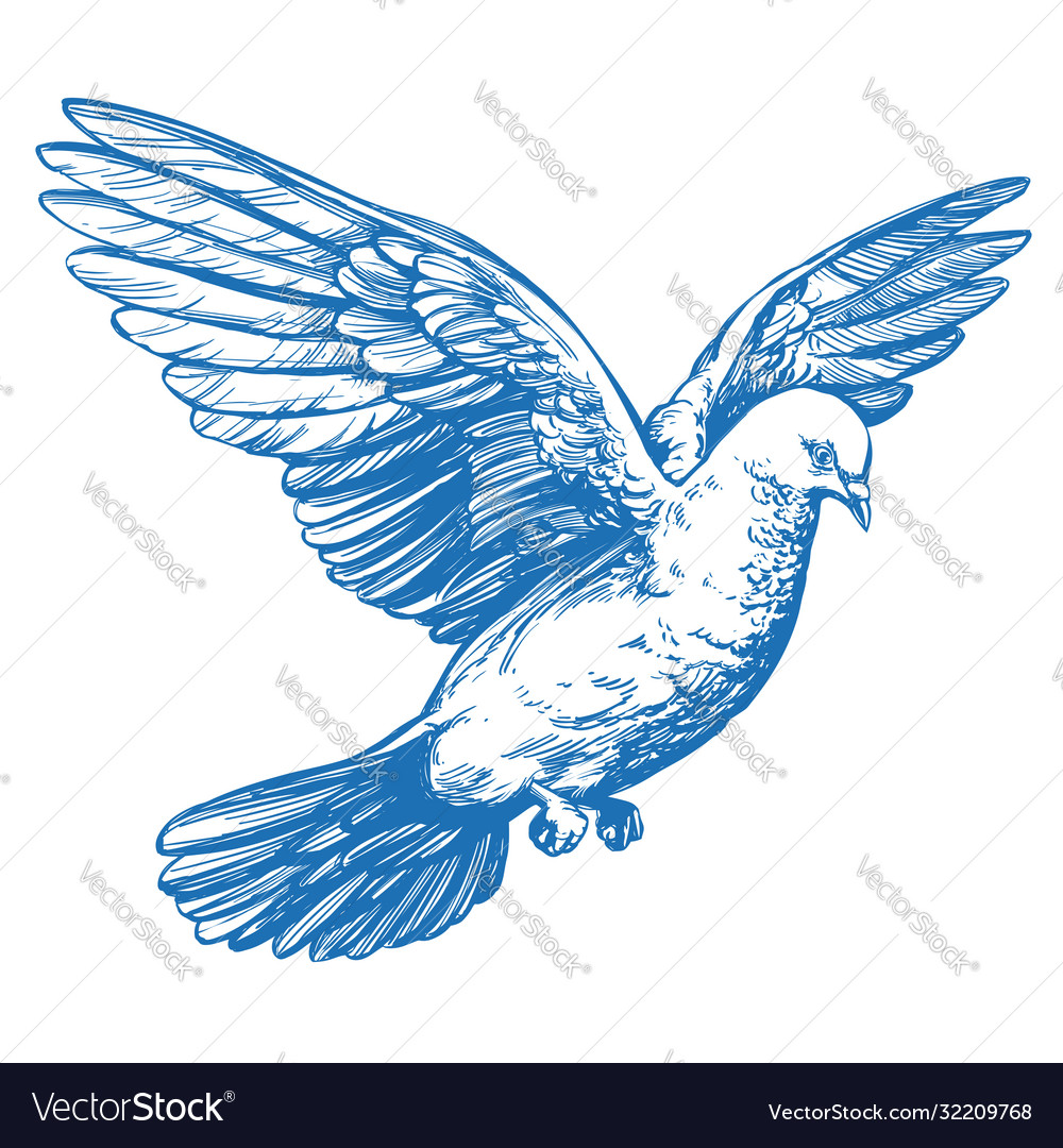 Dove bird is a symbol peace and purity hand