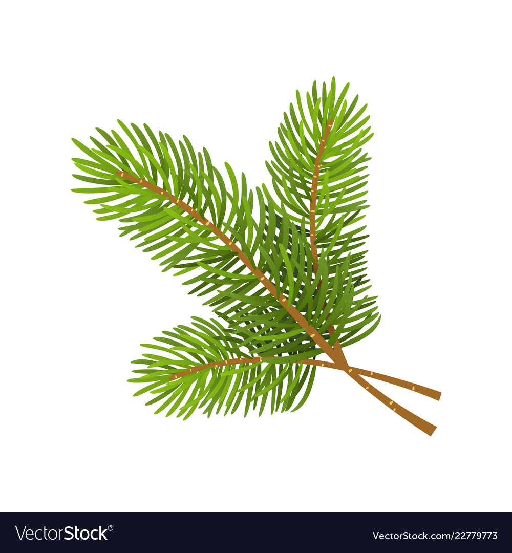 Christmas Branch Vector.Christmas Tree Branch