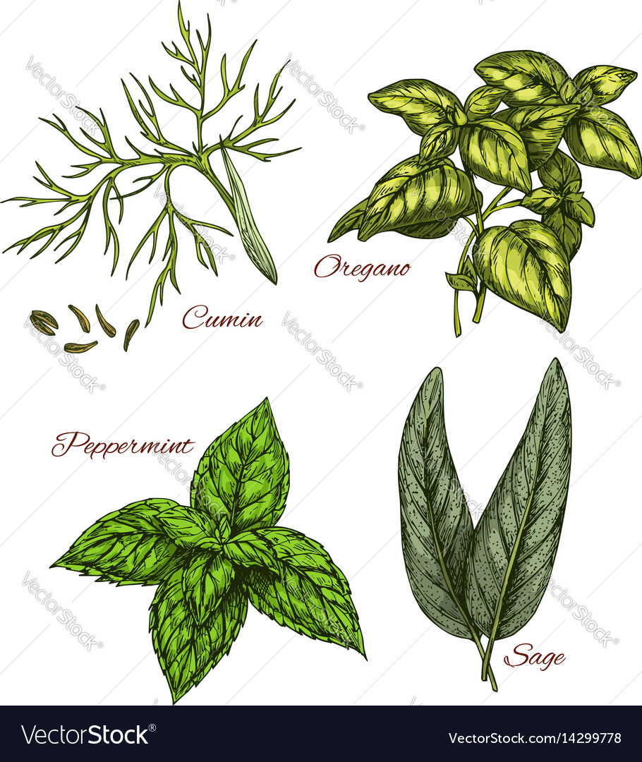 Sketch icons of spice and herb dressings
