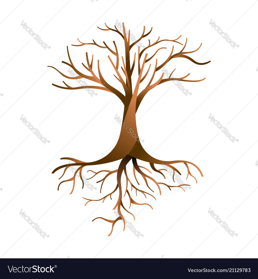 Empty tree isolated with branches and roots