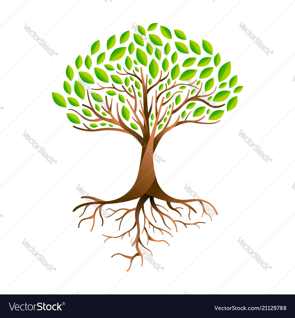 Green leaf tree with branches and roots