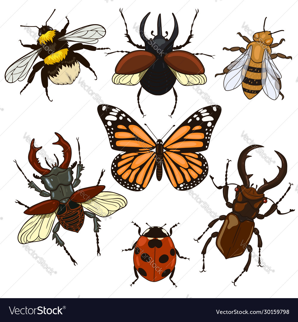 Set insects isolated on a white background
