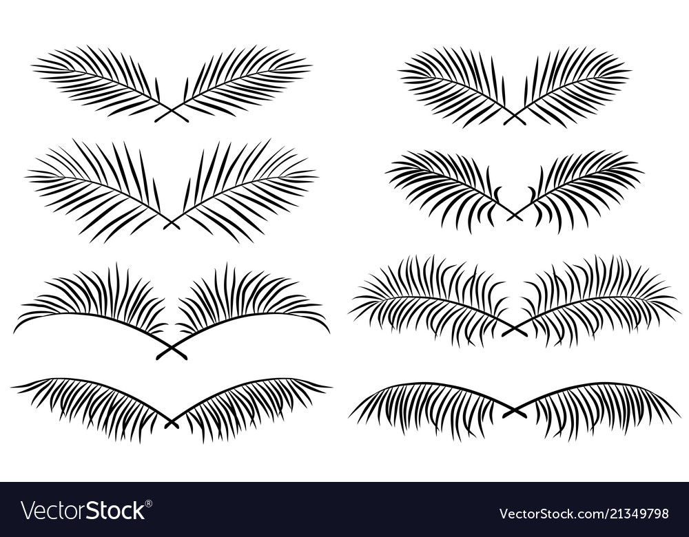 Set of borders with palm leaves