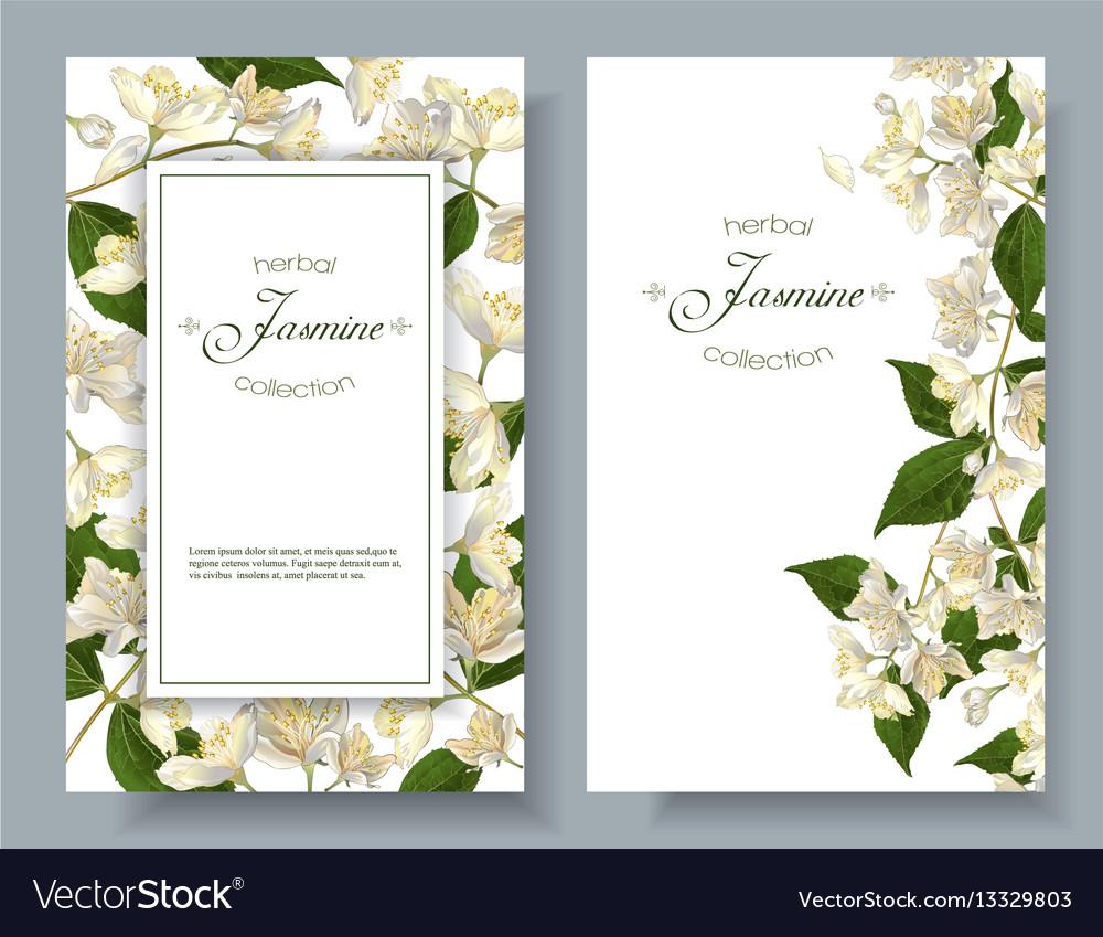 Jasmine flowers banners royalty free vector image jasmine flowers banners vector image izmirmasajfo
