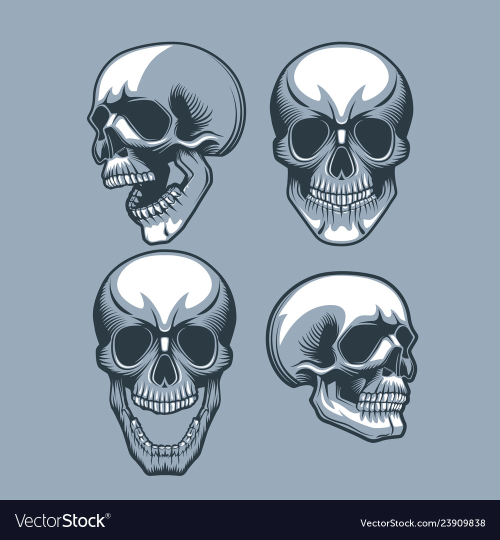 A set of four skulls looking in different