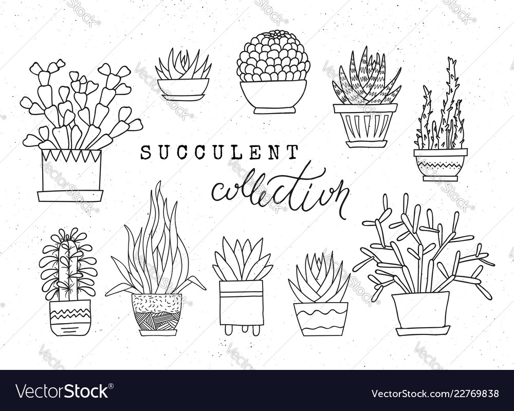 Decorative potted succulents set of hand