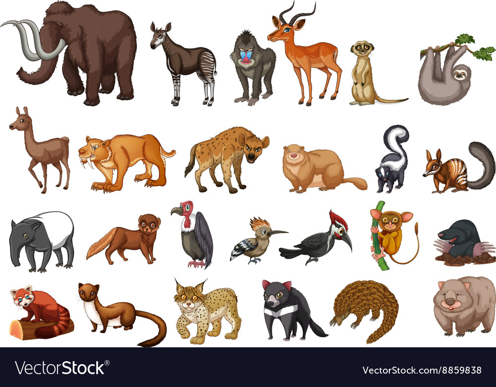 Different type of wild animals on white Royalty Free Vector