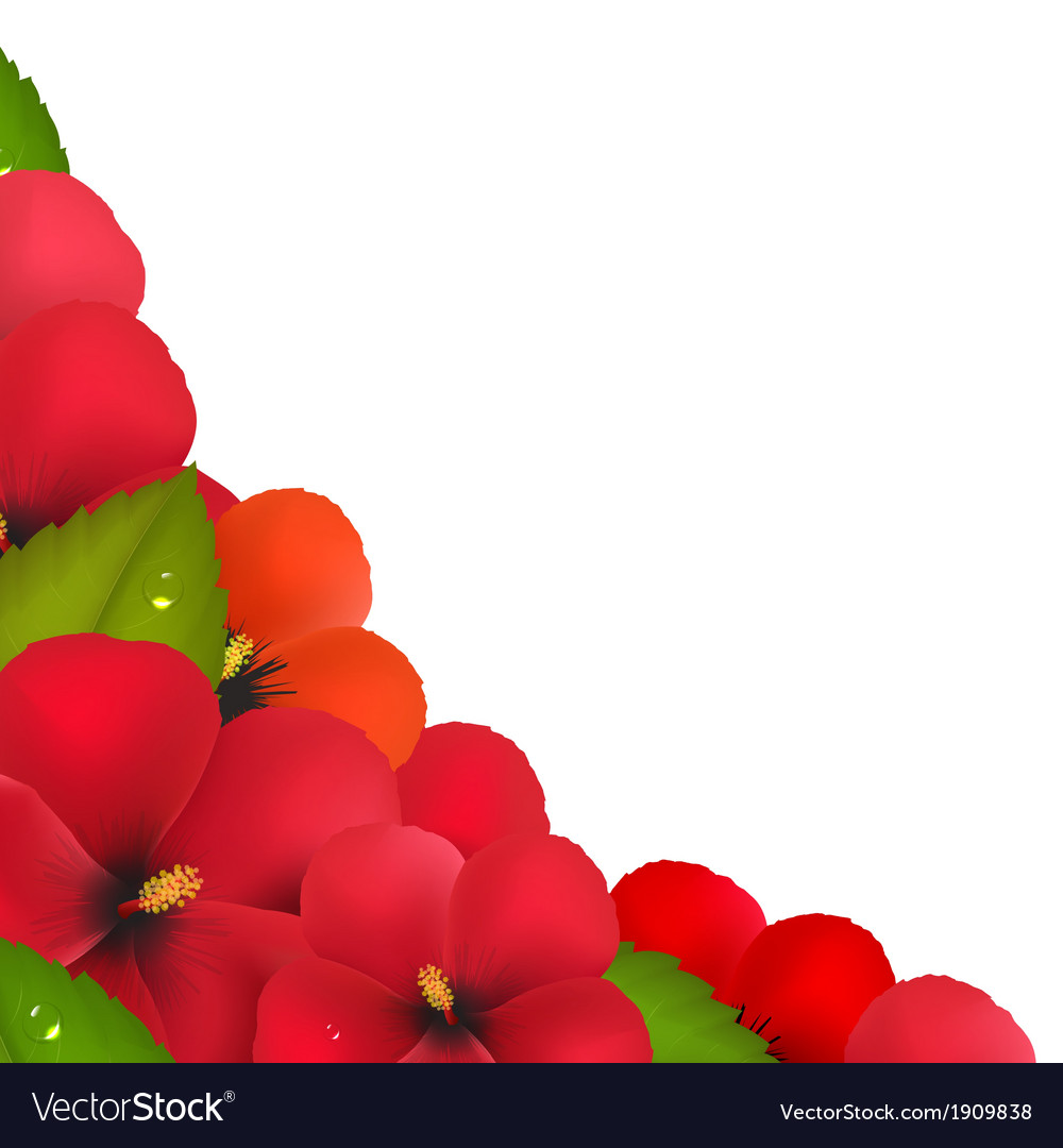 Red Hibiscus Flowers With Leaf Border Royalty Free Vector
