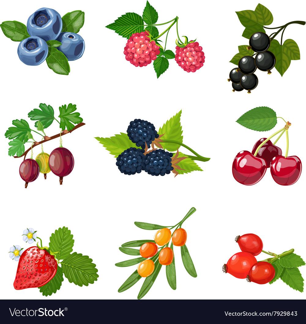 Картинки ягоды для детей доу