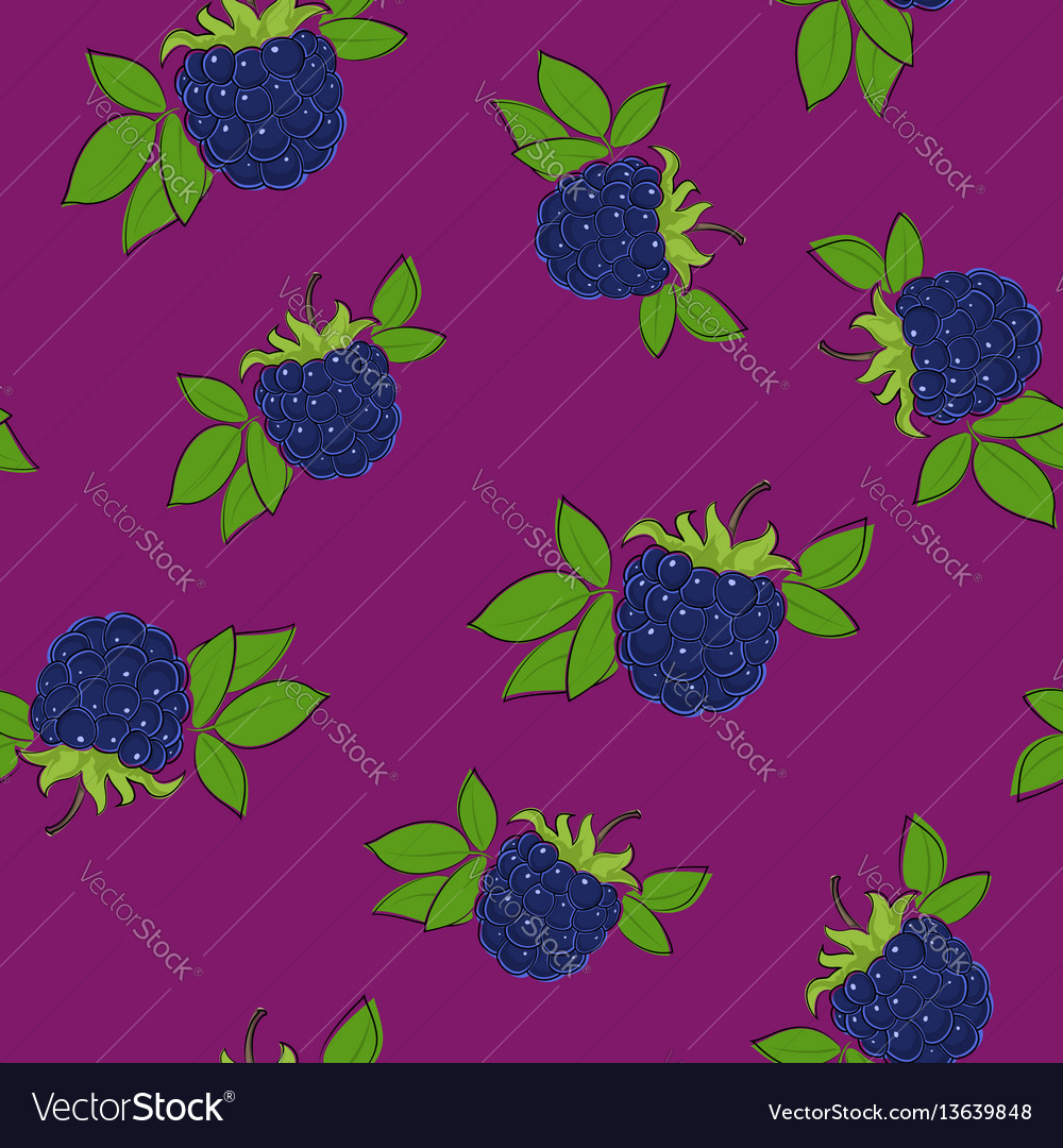 Seamless pattern blackberry on lilac background vector image
