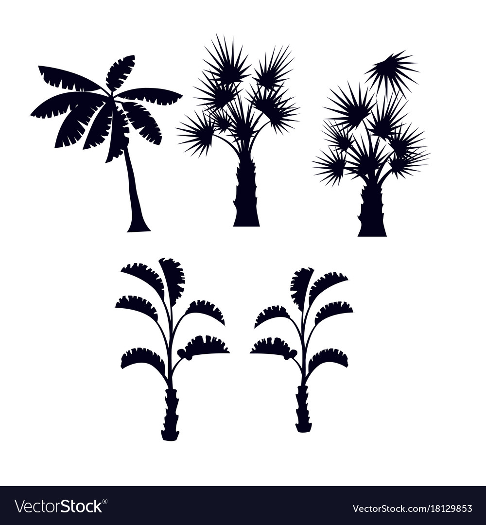 Tropical palm trees silhouette set
