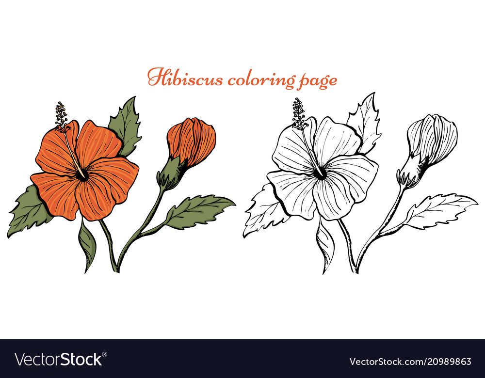 Hibiscus Flower Coloring Page Royalty Free Vector Image