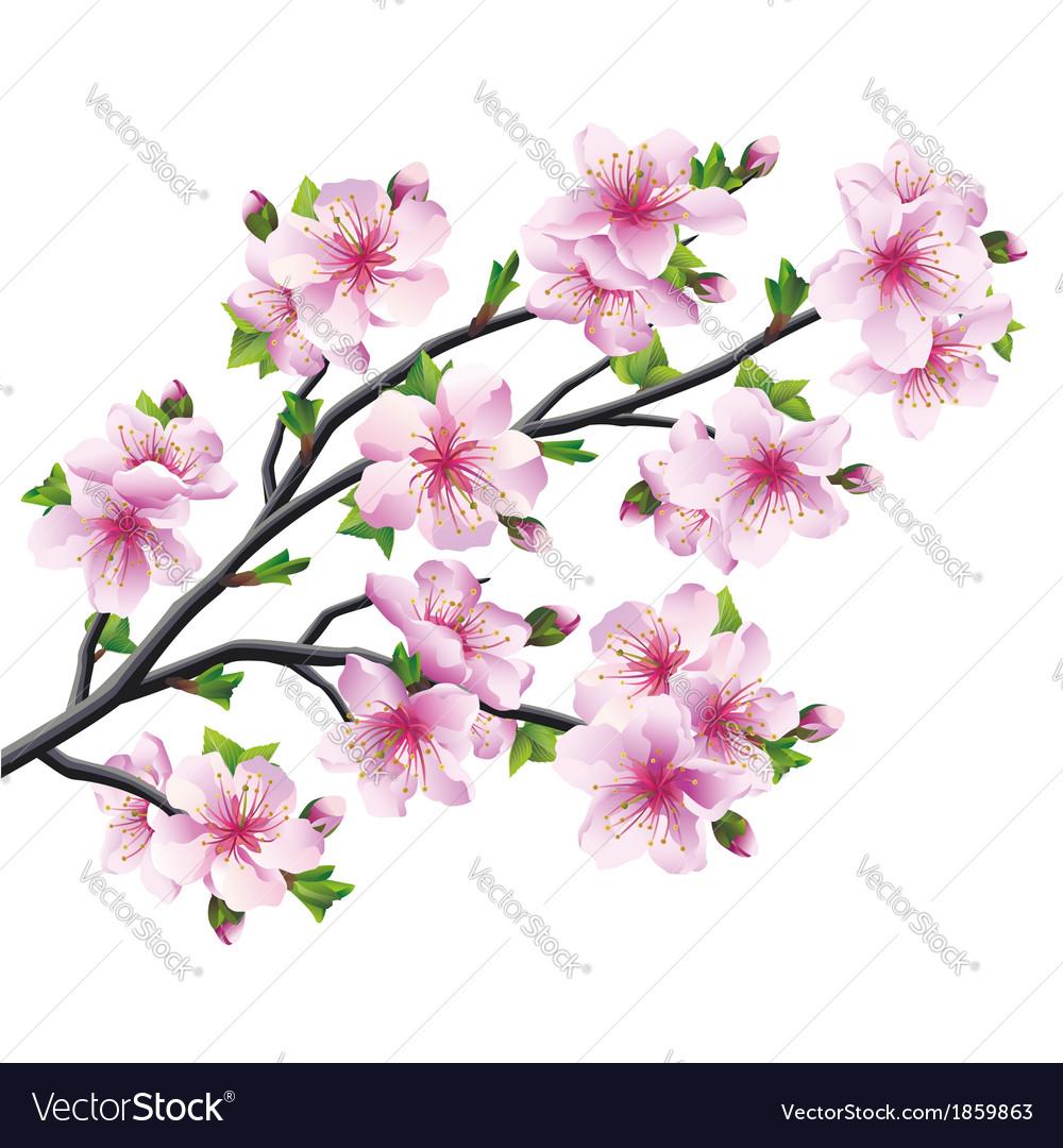 Japanese Tree Sakura Cherry Blossom Royalty Free Vector