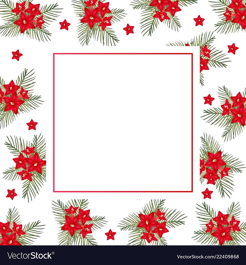 Cypress vine flower on christmas white banner card