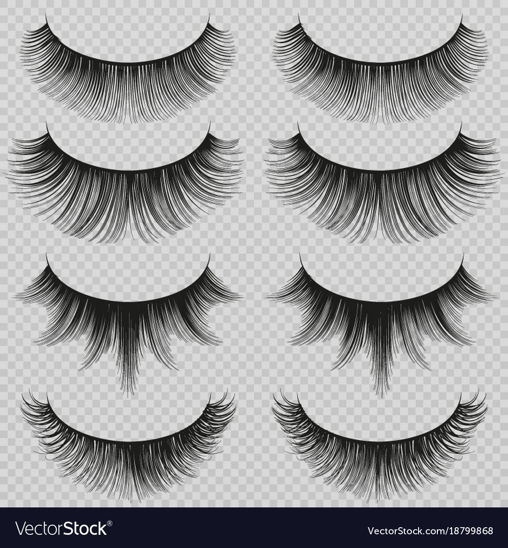 Feminine lashes set realistic false vector image
