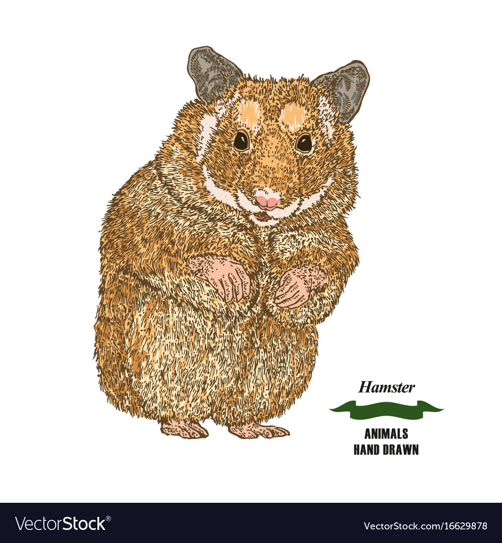 Hand drawn hamster colored sketch animal on white