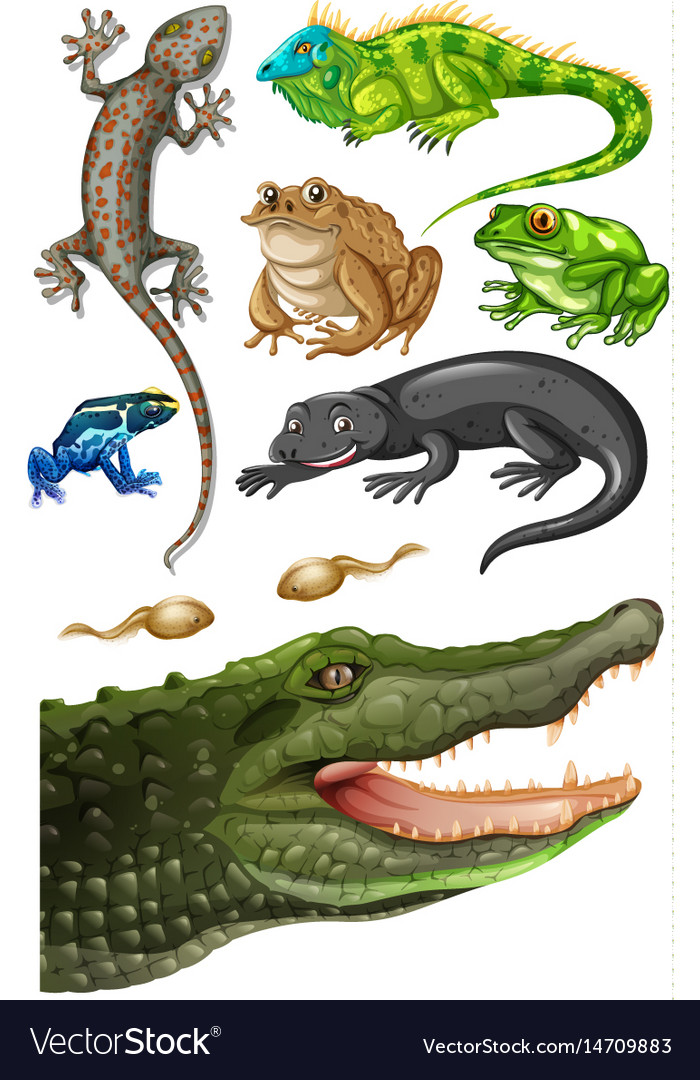 Different types of reptiles vector image