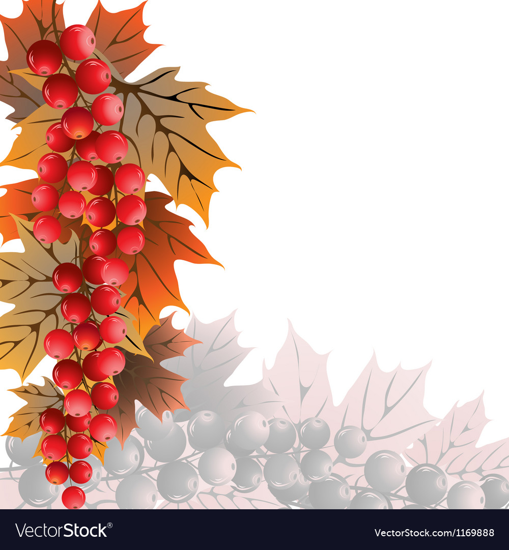 Red currant on white vector image